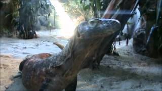 Turtle Back Zoo Trip June 2012 Part 1