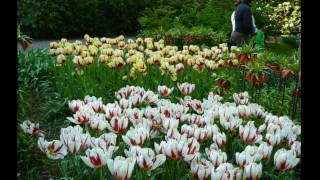 Визуальная медитация с тюльпанами. Парк цветов в Голландии.(Визуальная медитация. Просто расслабьтесь, включите видео на полный экран и позвольте себе насладиться..., 2014-05-07T11:15:23.000Z)