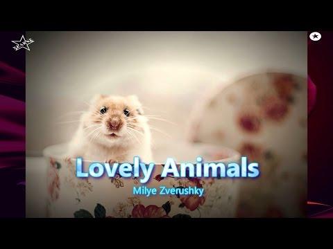 Lovely Animals(  PHOTOs ) milye zverushki xLArve