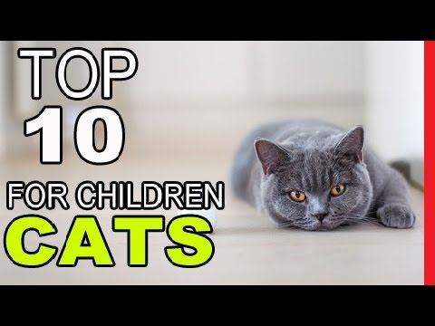 Top 10 Best Cat Breeds For Children