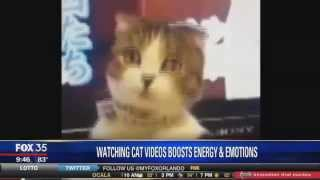 Watching Cat Videos Good for Your Brain: Dr. Romie on Fox News