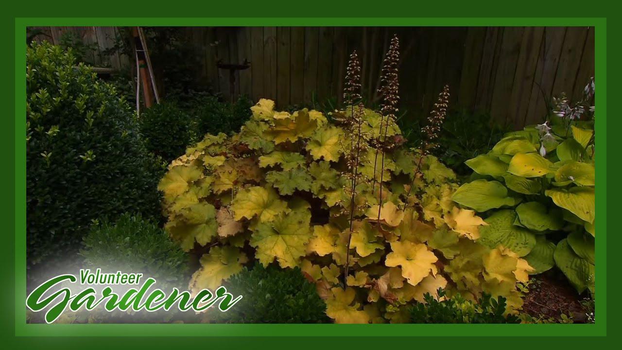 An Artist\'s Garden | Volunteer Gardener - YouTube