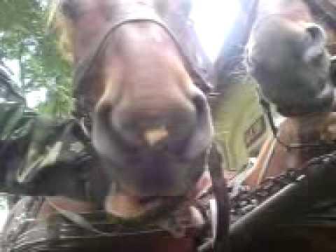 talking horse 1