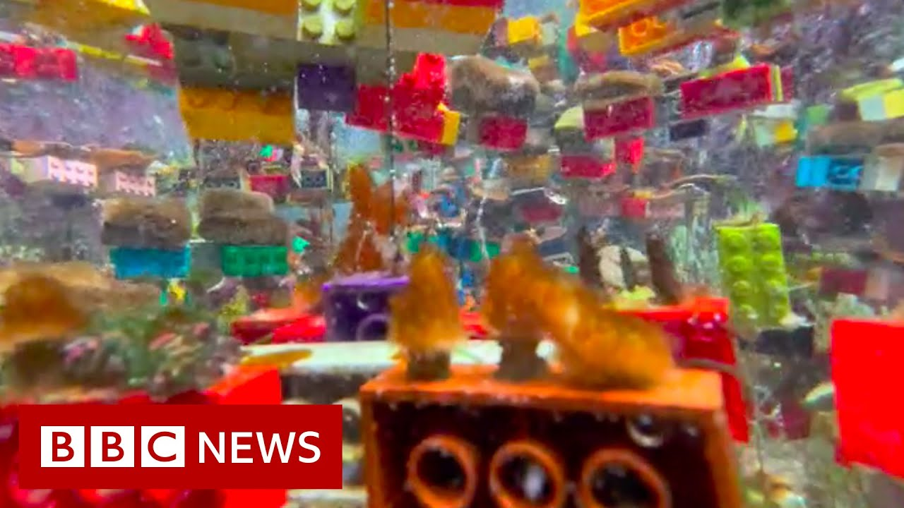 Download Can Lego help save Singapore's coral reefs? - BBC News