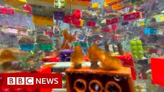 Can Lego help save Singapore's coral reefs? - BBC News