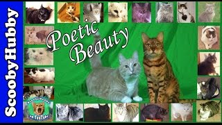 Poetic Beauty -- Cat Clips #281