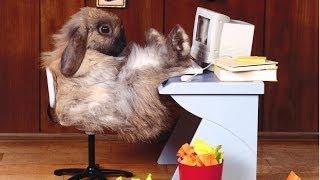 Rosso Rabbit In Trouble Ostern 2014 [ Uncut ][ Blood ][ Edition ][ FSK 40 ]( Nichts für Weicheier )