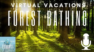 Virtual Vacations: A Peaceful Forest Bathing Session | SmarterTravel