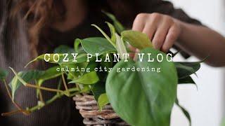 A Cozy Plant Vlog | Calming City Gardening