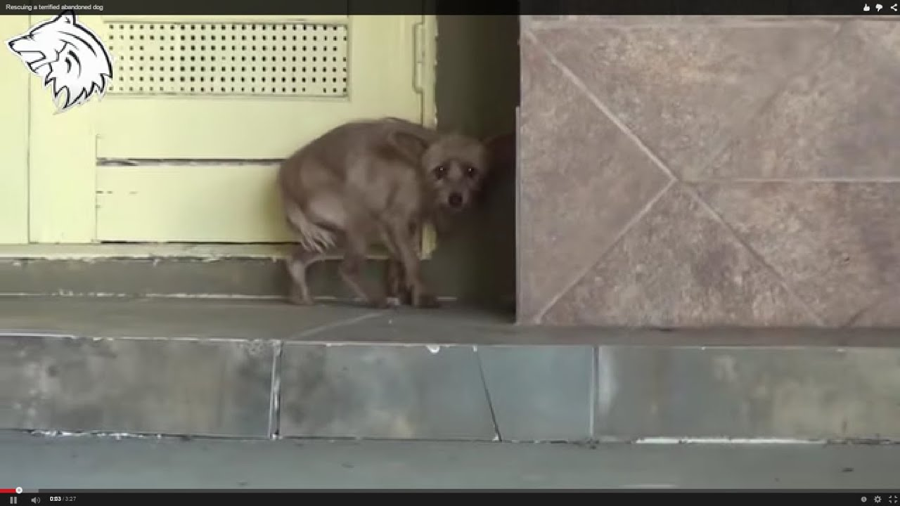 Rescue Dog Rescuing A Terrified Abandoned Dog Hope For Paws Animal Aid Youtube