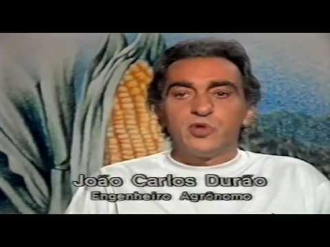 Algodão - Programa Agricultura de Hoje - TV Manchete