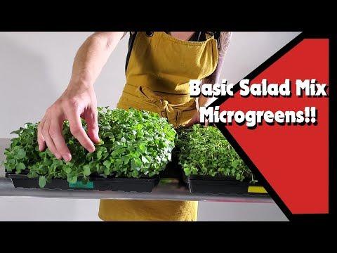 Salad Mix Microgreens!! Nutrients vs. No Nutrients!?!