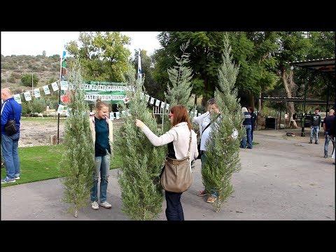 Christmas Cheer At Givat Yeshayahu In Israel
