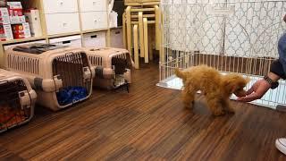 犬の保育園Pee-Ka-Boo(ピーカーブー) http://www.pee-ka-boo.net/ 犬...