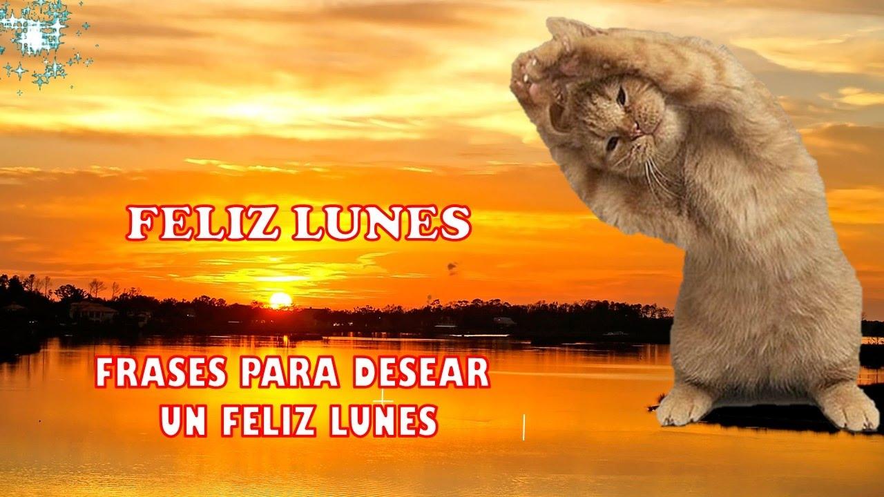 Feliz Lunes Frases Para Desear Un Feliz Lunes Happy Monday