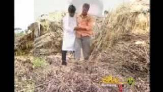 Preetiya parivala.mp4 Kannada janapada geethe
