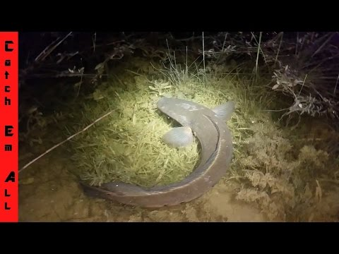 Catching SNAKEHEAD in PUDDLE! HAND-LINED!! + Night Time Peacock Bass fishing