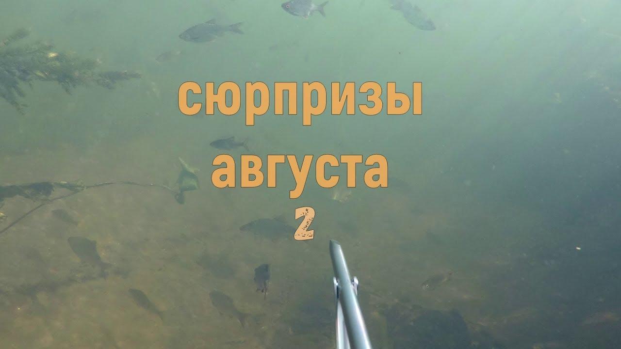 Подводная охота - Сюрпризы августа 2