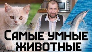 Самые умные животные.  Кто умнее кошки или собаки, вороны или депутаты?