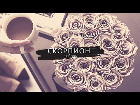 Скорпион и Любовь
