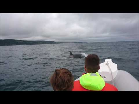 Orcas on our August trips
