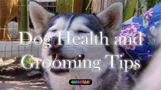 Dog Health and Grooming Tips - 4575