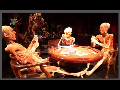BODY WORLDS - Il vero mondo del corpo umano - YouTube