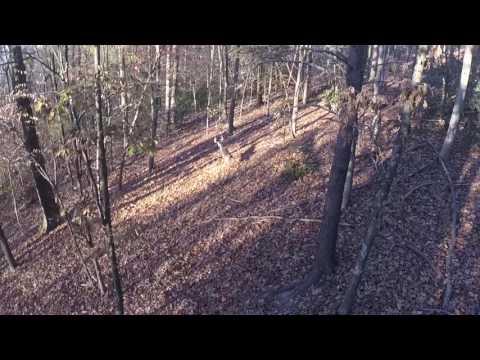 East TN deer hunt