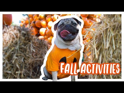 Fall Activities - Doug The Pug