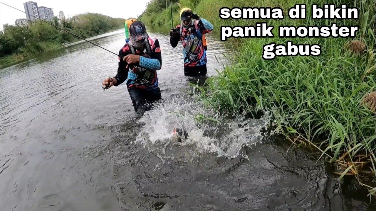 mancing ikan gabus monster tarikanya bener bener seperti ikan Toman semua di bikin panik