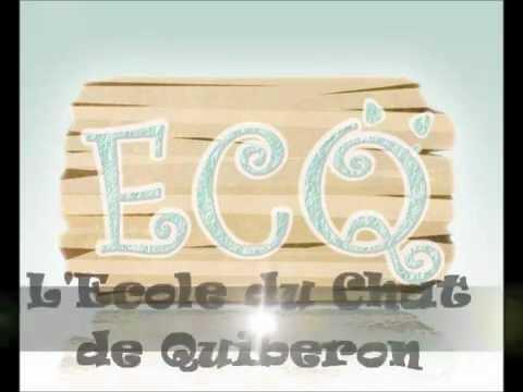 Nos Chatons Et Chats à L'adoption Ecole Du Chat De Quiberon
