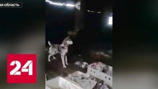 Зоозащитники пытаются помочь десяткам истощенных собак - Россия 24
