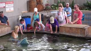 Dallas Children's Aquarium Offers Opportunity to Feed Cownose Stingray's