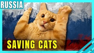 This Funny Russian Way of Saving Cats Will Definitely Make You Laugh & Cry