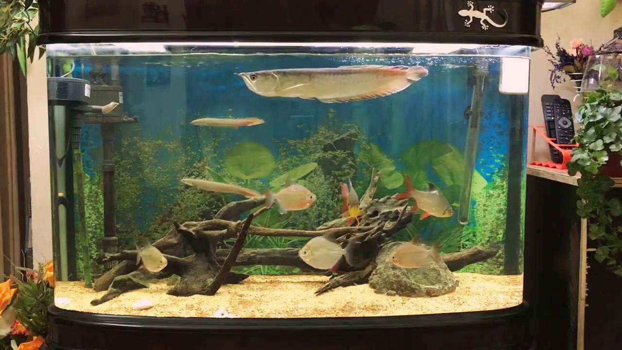 Fish aquarium in kurla - Silver Arowana Aquarium 216 Ltrs