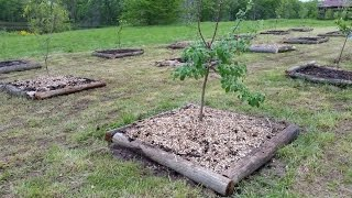 Planting Fruit trees in clay soil