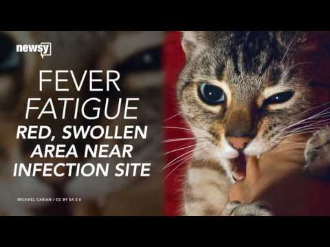 cat-scratch-disease-is-hospitalizing-more-people
