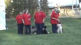 Canines And Friends Honor America.mpg
