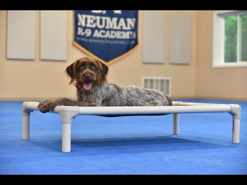 Sally (Wirehaired Griffon) Puppy Camp Dog Training Video Demonstration