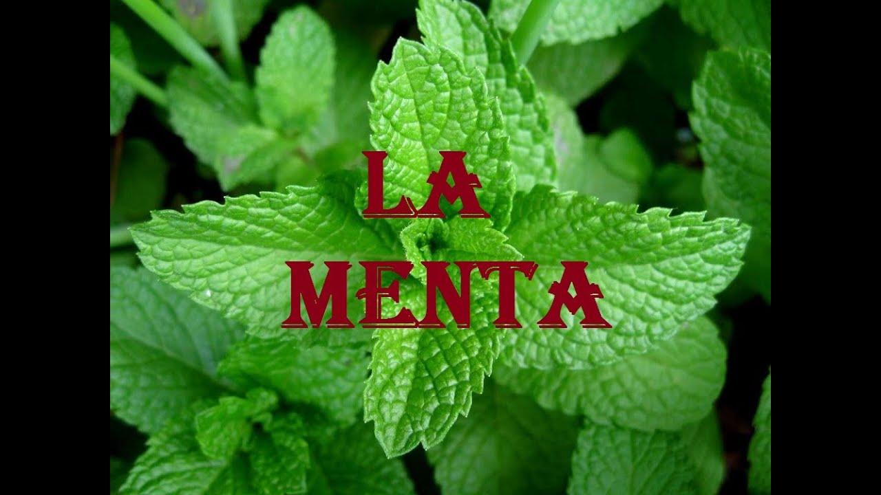 La menta sus beneficios y propiedades youtube for Planta decorativa con propiedades medicinales