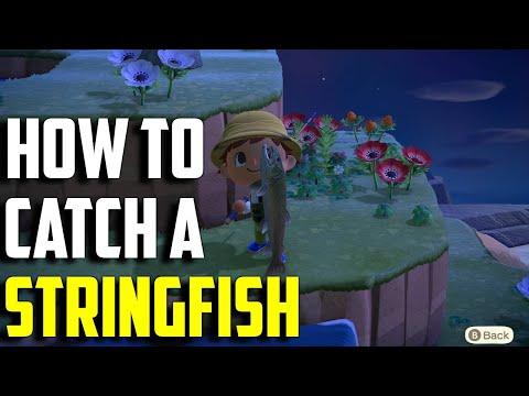 How To Catch A Stringfish | Stringfish ACNH | Animal Crossing New Horizons Stringfish | Stringfish