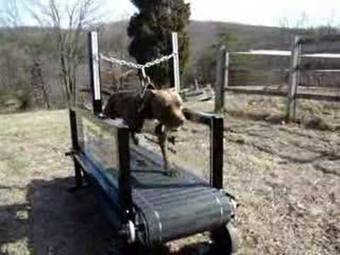 Homemade Dog Treadmill Sale