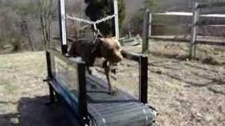 Dog Treadmill / The Original Dog Trotter!