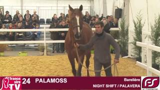 Lot 24 Palamoss - Salon des Etalons du Lion 2015