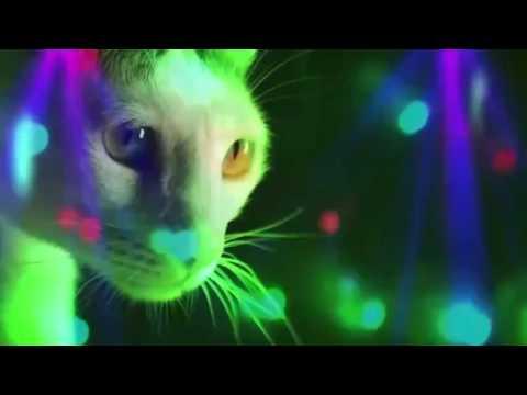 Meow Meow - Meow Meow Meow (Original Mix)