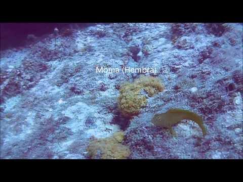buceo, Punta de la Mona, Almuñecar, La Herradura, Inmersión