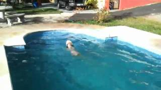 Rufus looks like he's learning to swim for 1st time in pool.MOV Thumbnail