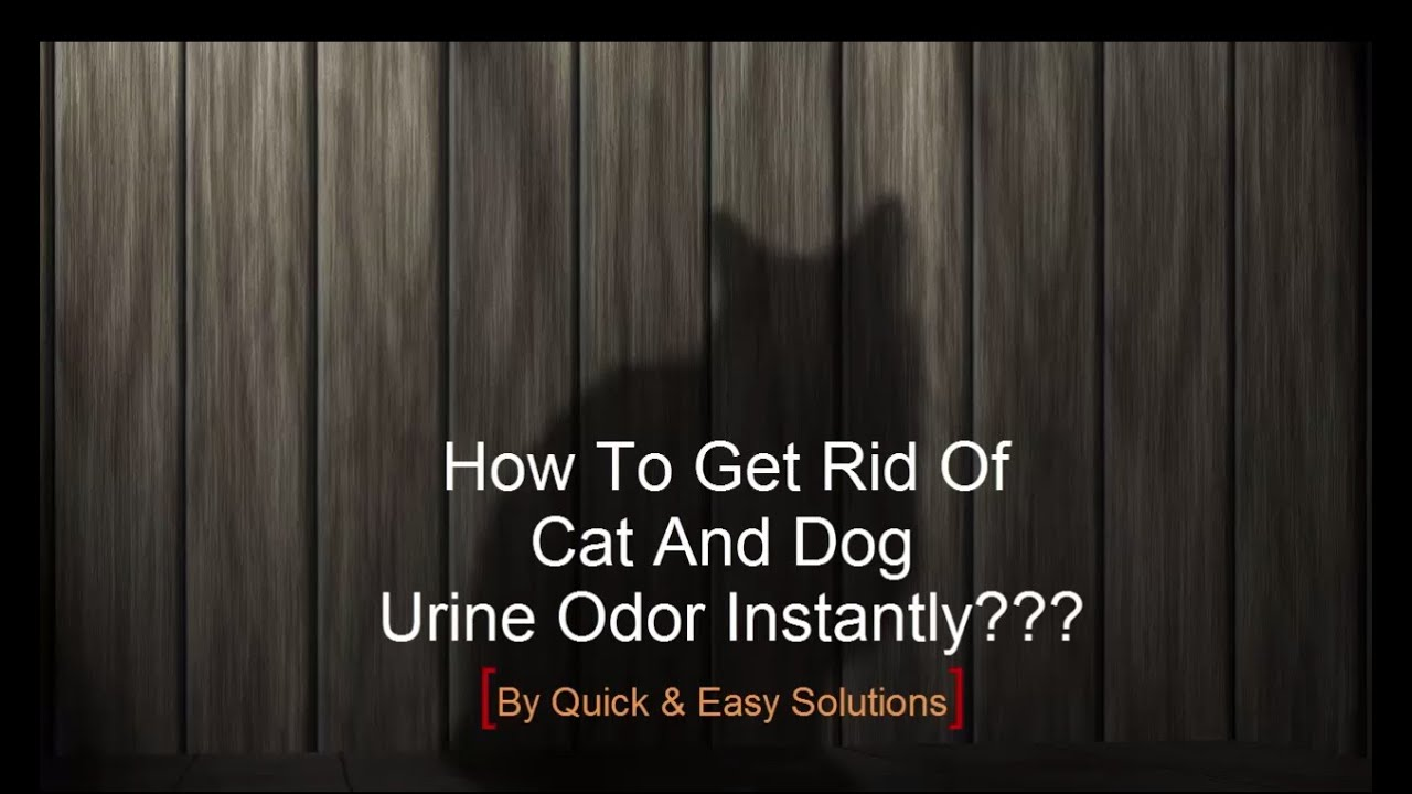 How To Get Rid Of Cat Urine Smell >> How to get rid of Cat and Dog Pee Smell Instantly with ...