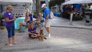 Флорида Downtown Fort Lauderdale где вы можите купить товары или....выбрать себе питамца из приюта(, 2016-12-18T20:54:18.000Z)