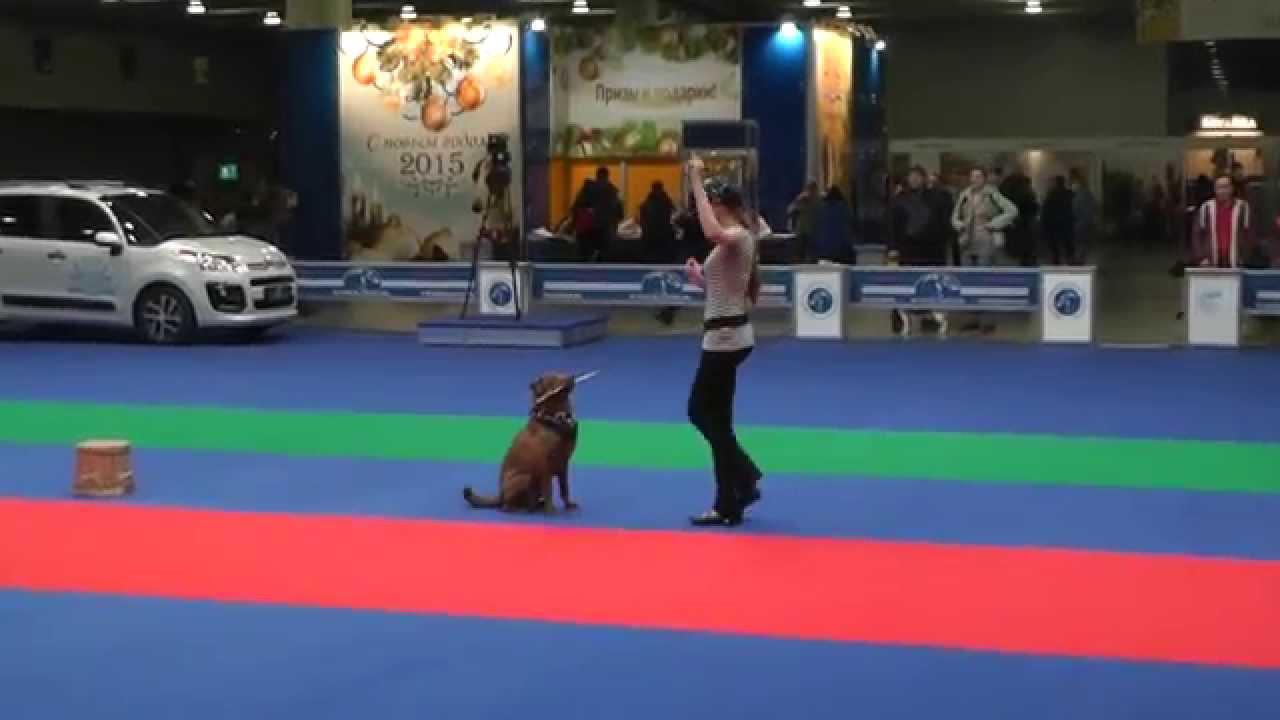 Танцы с собаками. Чемпионат РКФ - 2014.